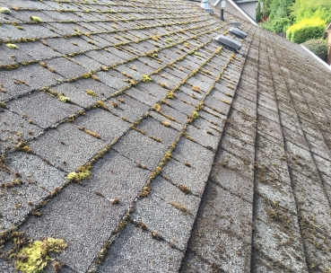 Cleaning a composition roof with a wire brush on an extension pole.